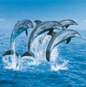 dolfijn1