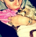 miley-cyrus-dog-lila-killed-by-ziggy