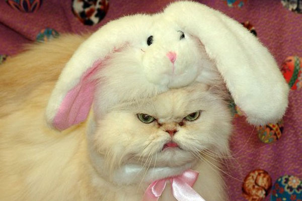 animals-wearing-bunny-ears-cat