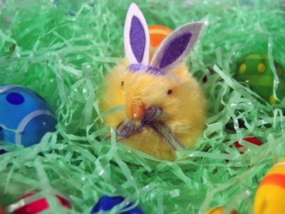 animals-wearing-bunny-ears-chick-2