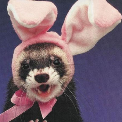 animals-wearing-bunny-ears-ferret