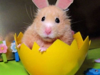 animals-wearing-bunny-ears-hamster
