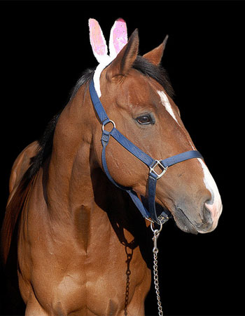 animals-wearing-bunny-ears-horse