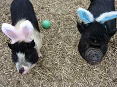animals-wearing-bunny-ears-pigs