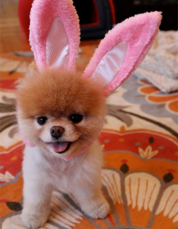 animals-wearing-bunny-ears-puppy-boo
