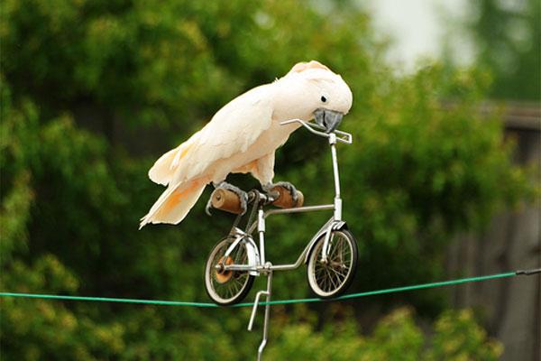 animals-as-humans-bird