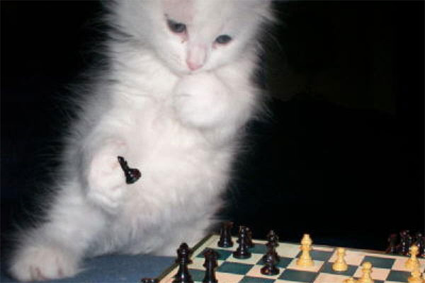 animals-as-humans-cat-chess