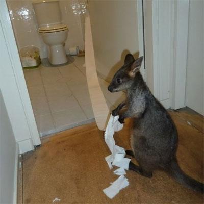 animals-as-humans-kangaroo