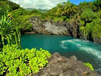 wallpaper_hawaii_animaatjes-58