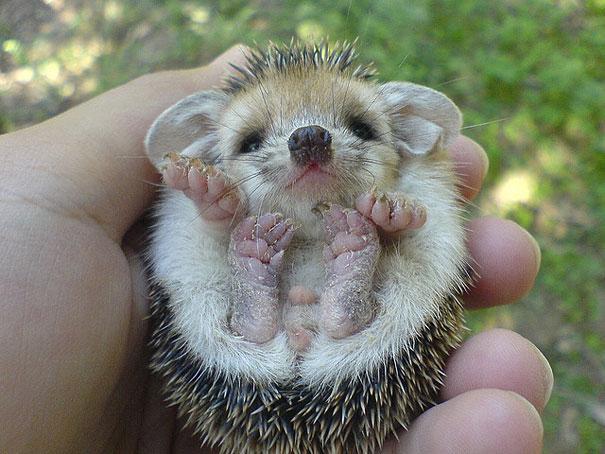 cute-baby-animals-13