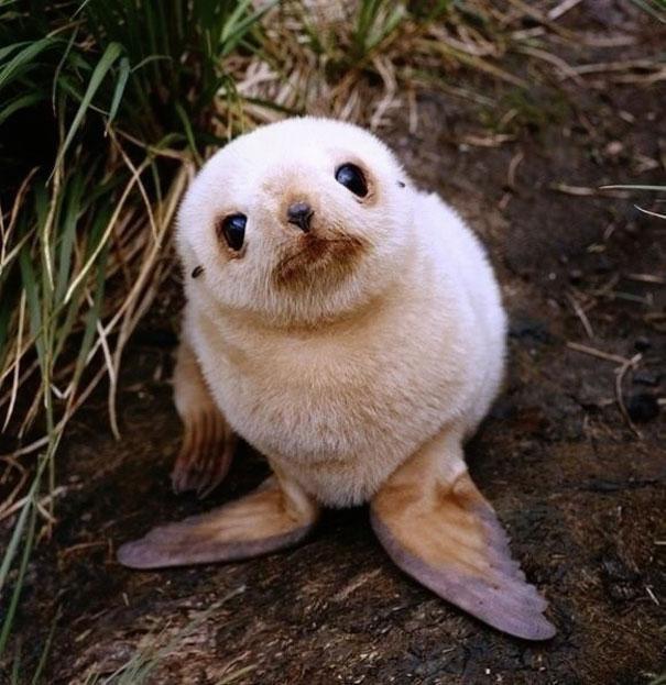 cute-baby-animals-17