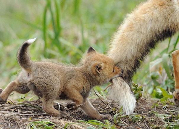 cute-baby-animals-18