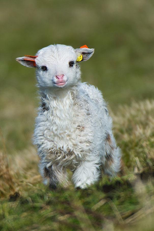 cute-baby-animals-32